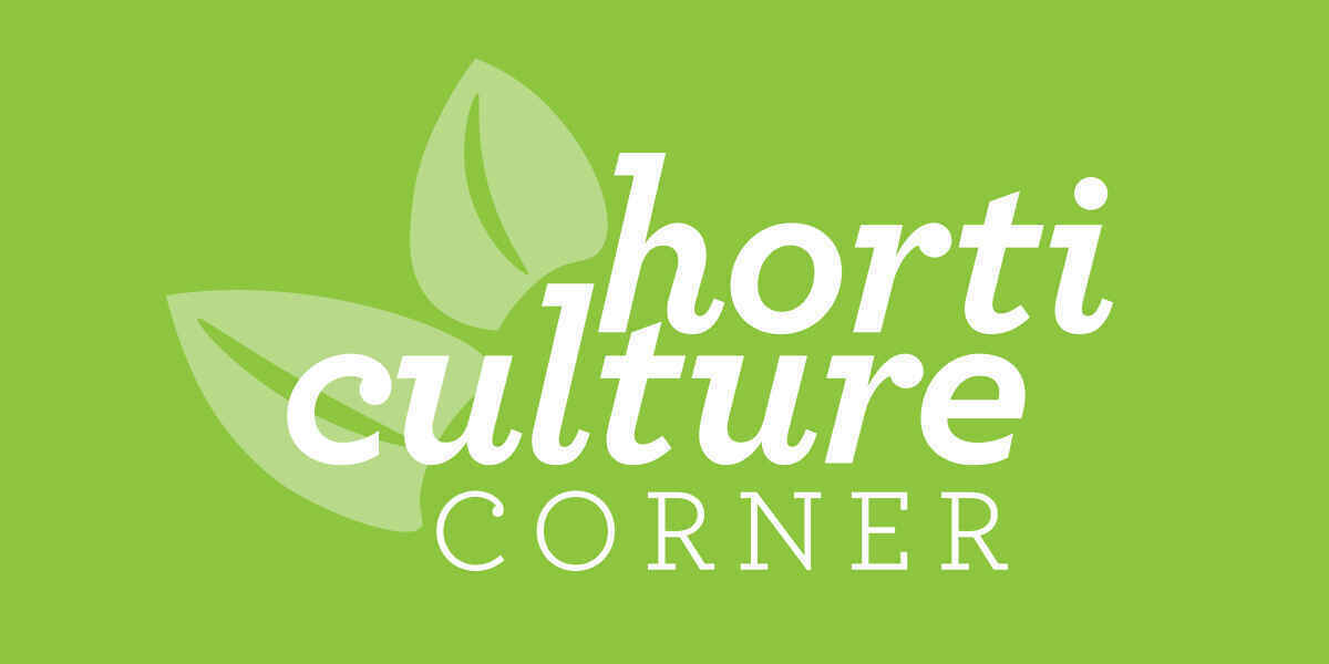 Horticulture Corner: Dig It! image