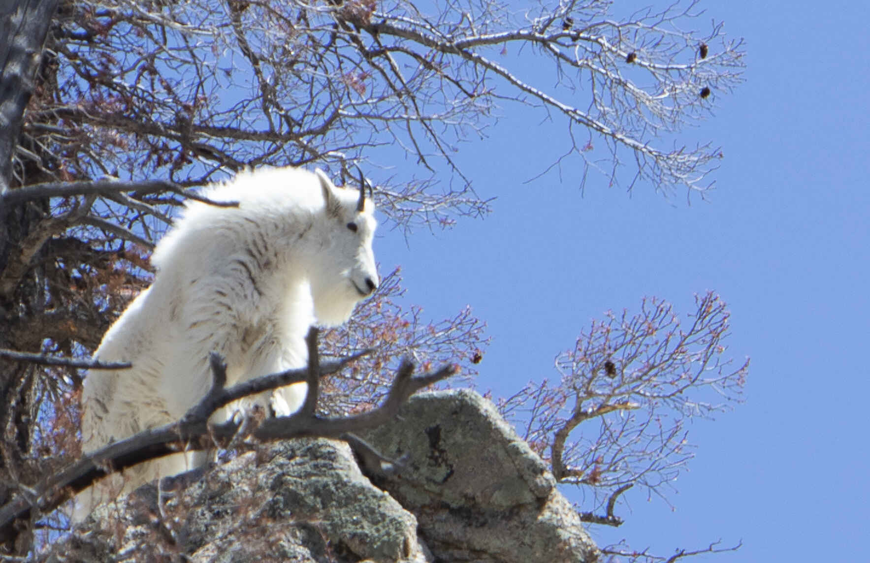 Virtual GARNA Lecture: A Night with Colorado Parks and Wildlife image