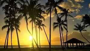 Hawaii Raffle image
