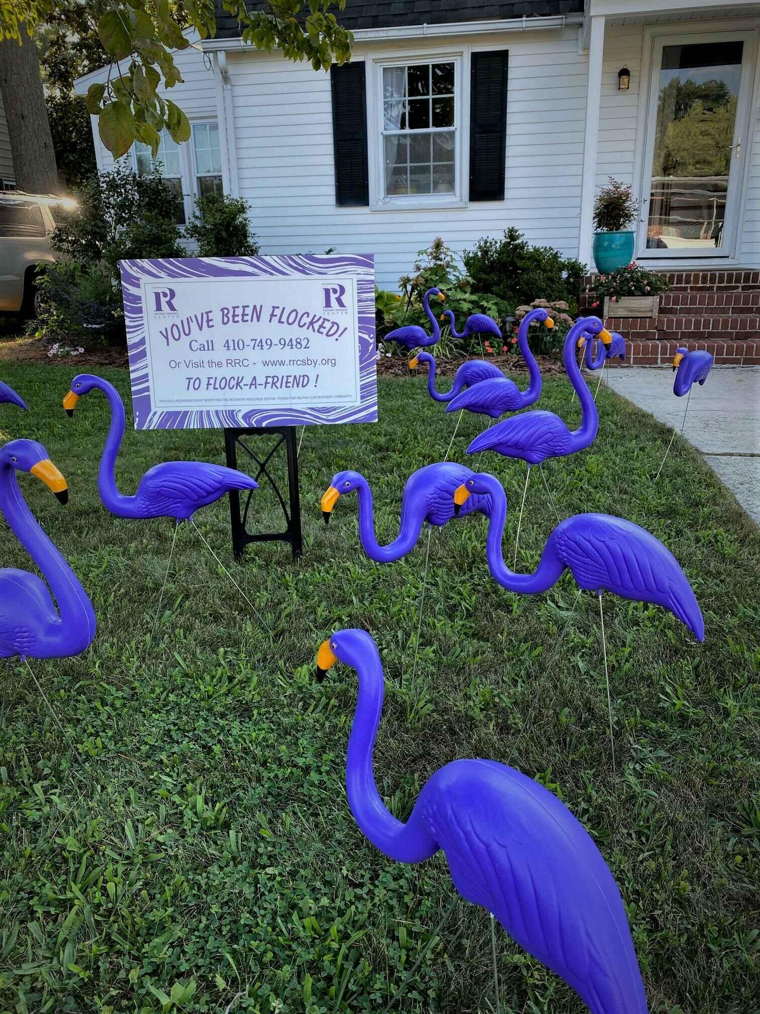 Flamingo Flock Fundraiser image