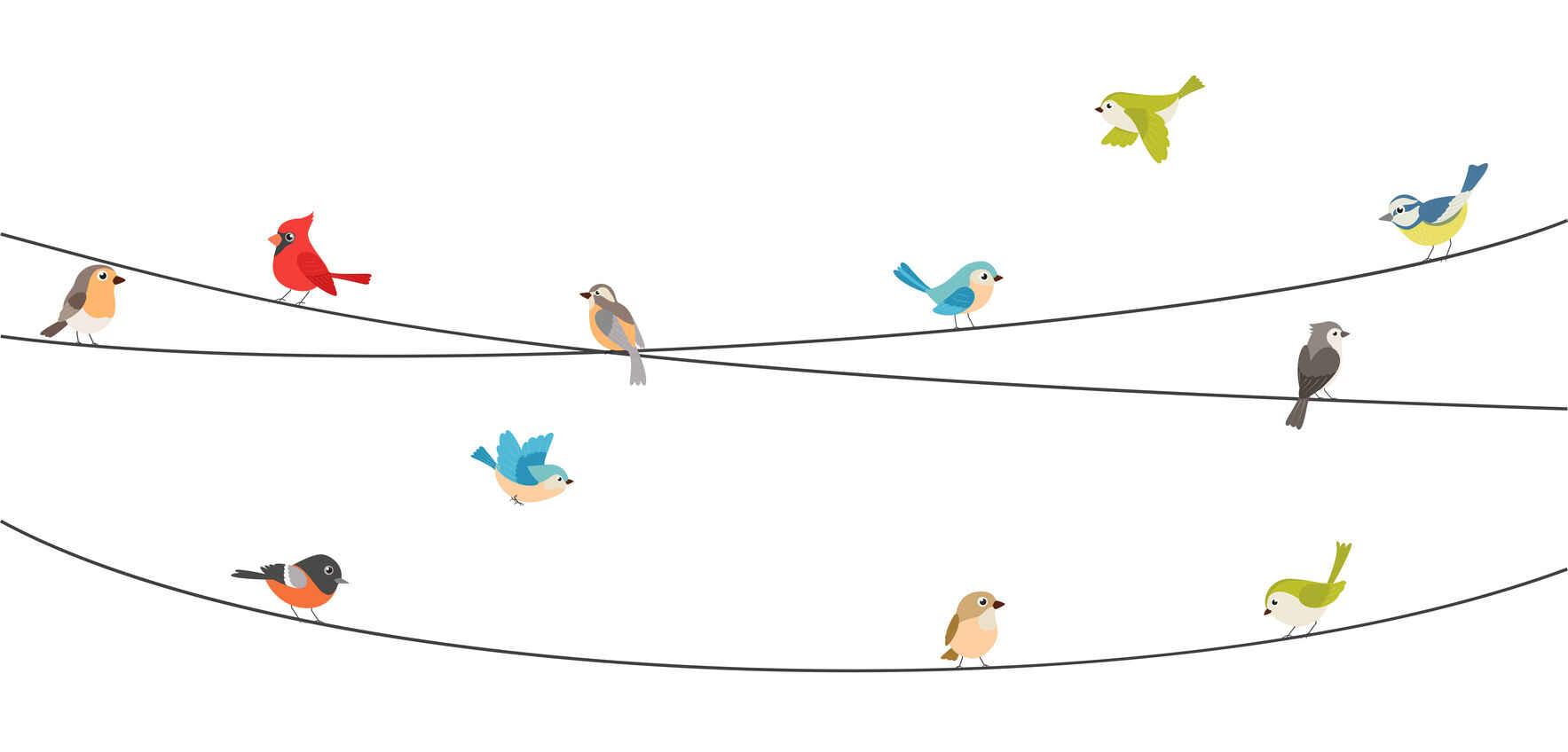 Back to School for Birders! image