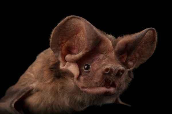 Bats of Southwest Florida image