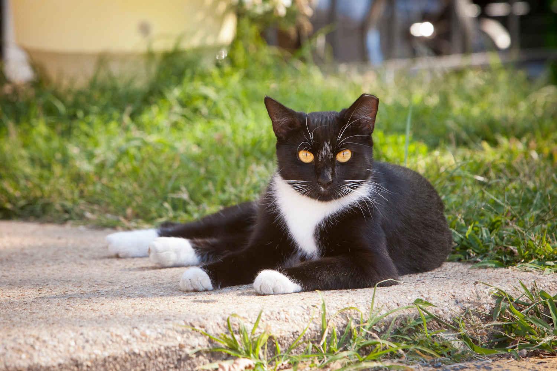 Community Cats TNR (trap-neuter-return) Workshop image