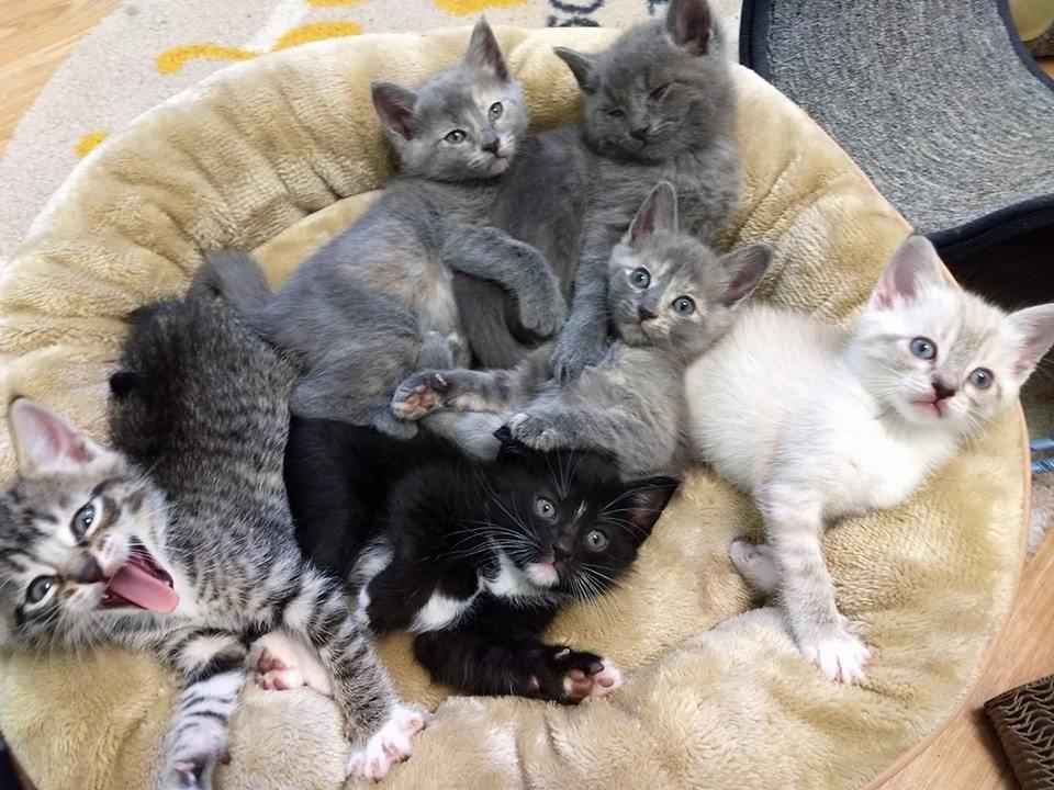 Kitten Rescue's Pop Up Cat Cafe  image