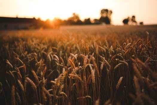 Annual Harvest Festival image