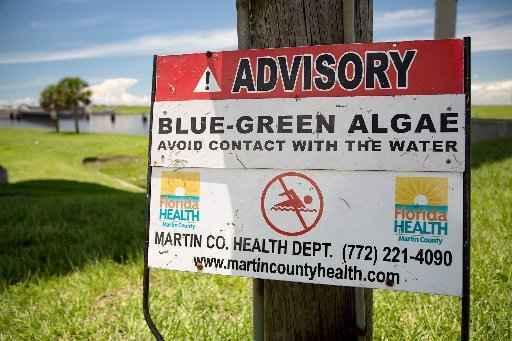 The Lake O-Algae Connection image
