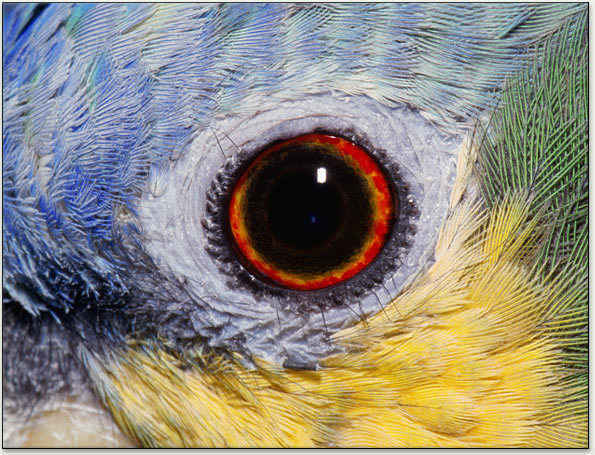 The Eyes Have It: Adaptations of Bird Eyes image