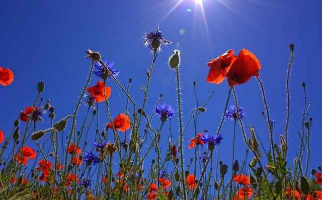 """""""WWI and the Poppy Tradition"""" featuring historians,              Jim Crocker and Charlie Gray image"""