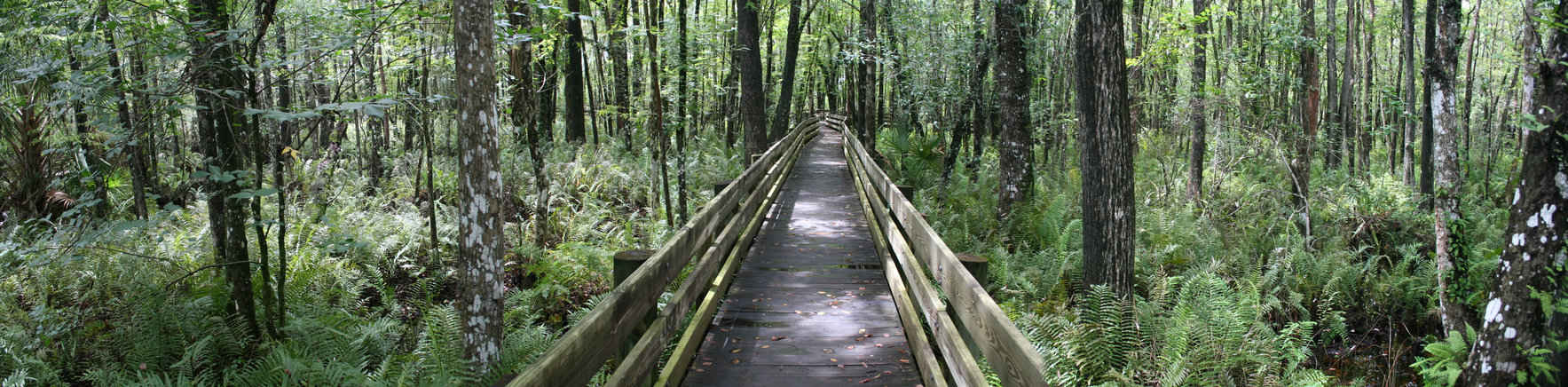 Six Mile Cypress Slough Field Trip image