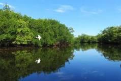 Bunche Beach Bird Outing image