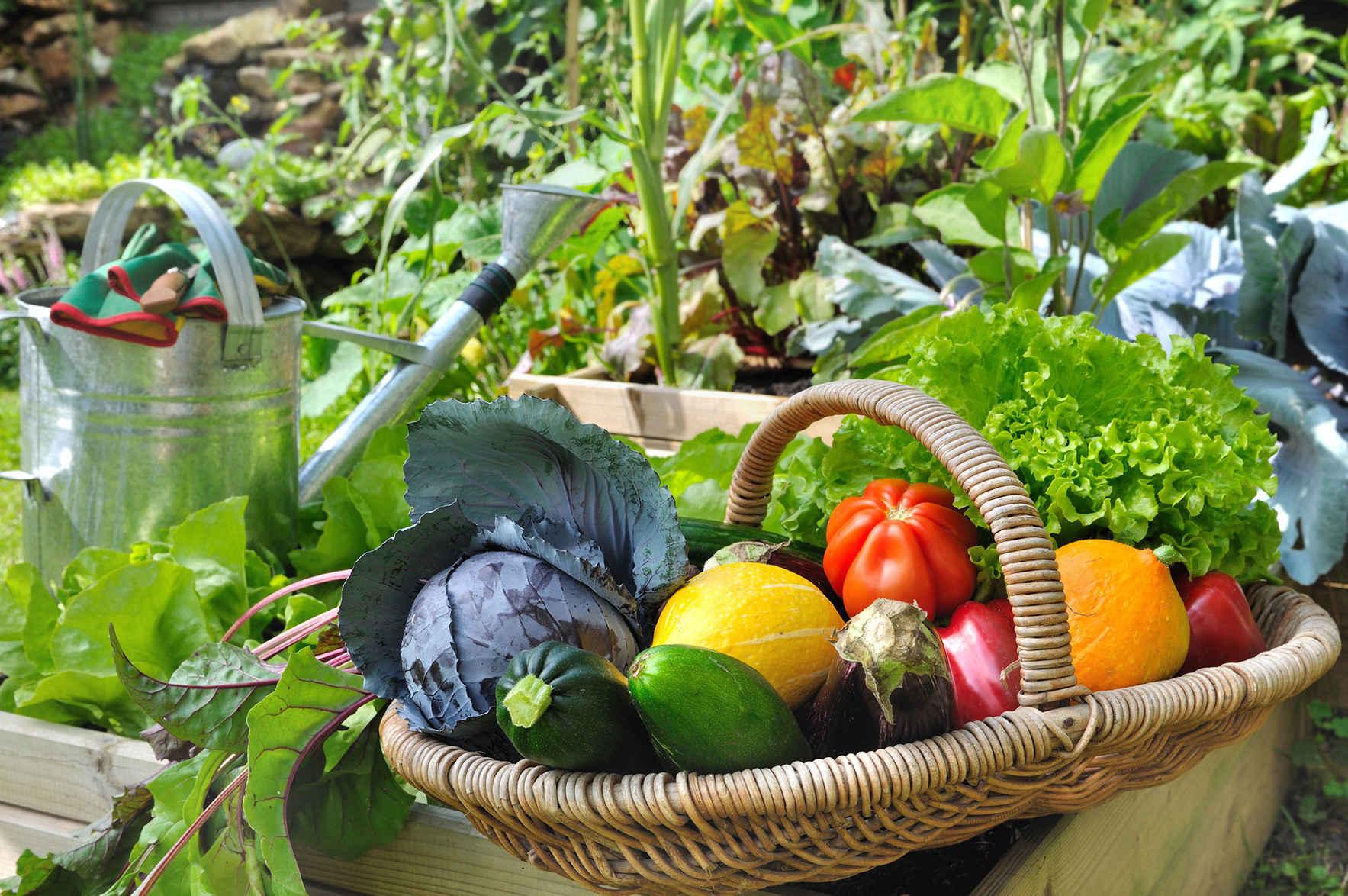 Urban Harvest Classes July- December 2019 image