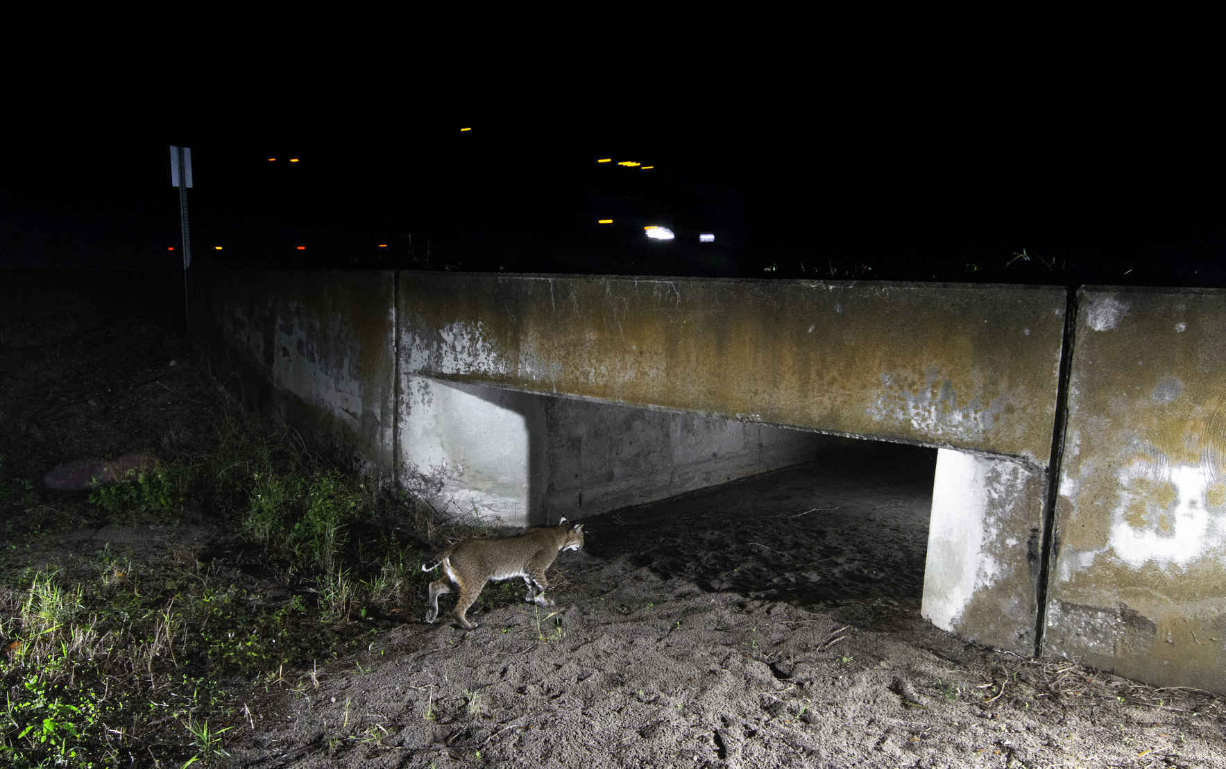Donate now to help ensure animals can safely cross our roads! image