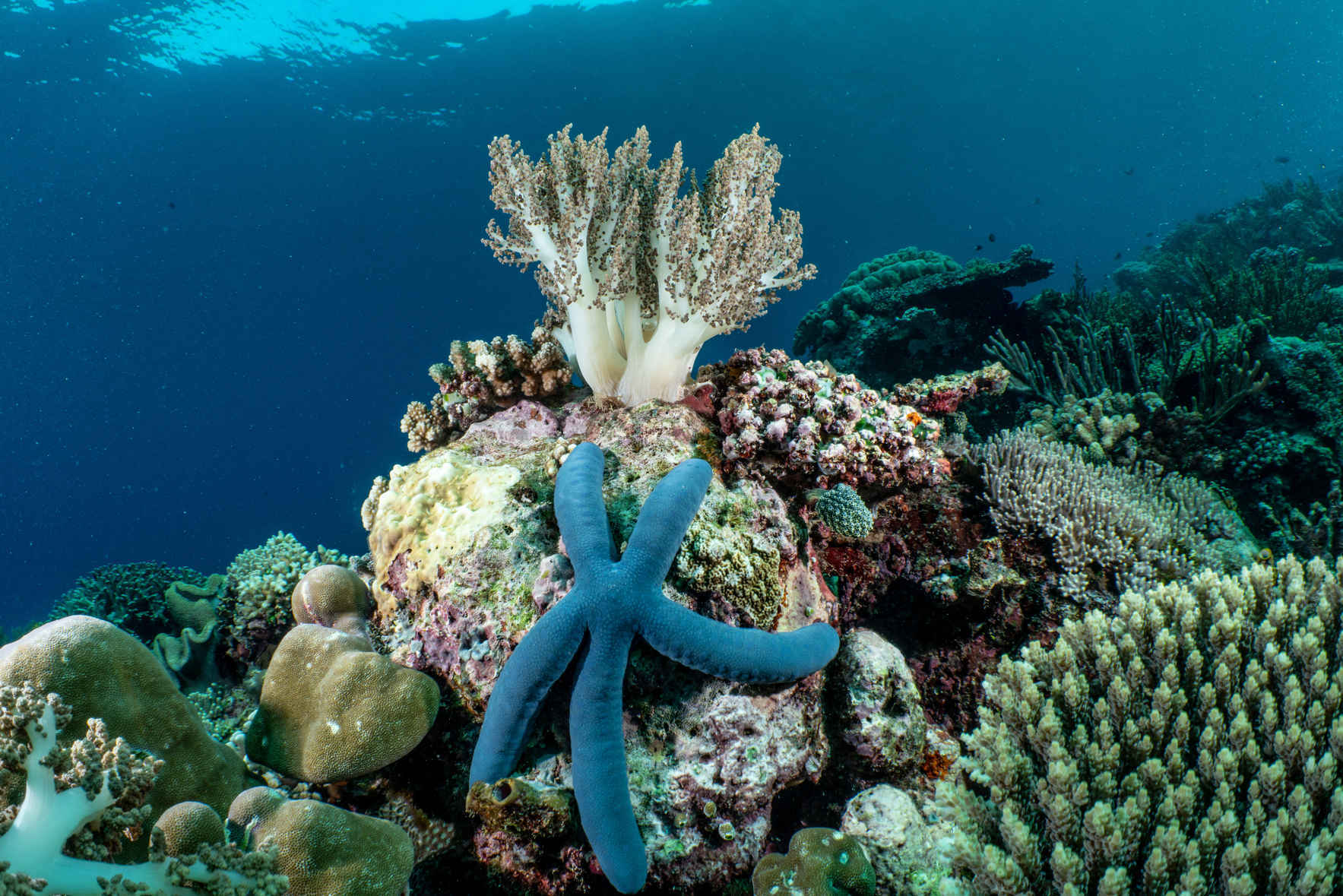 Protecting Oceans Can't Wait image
