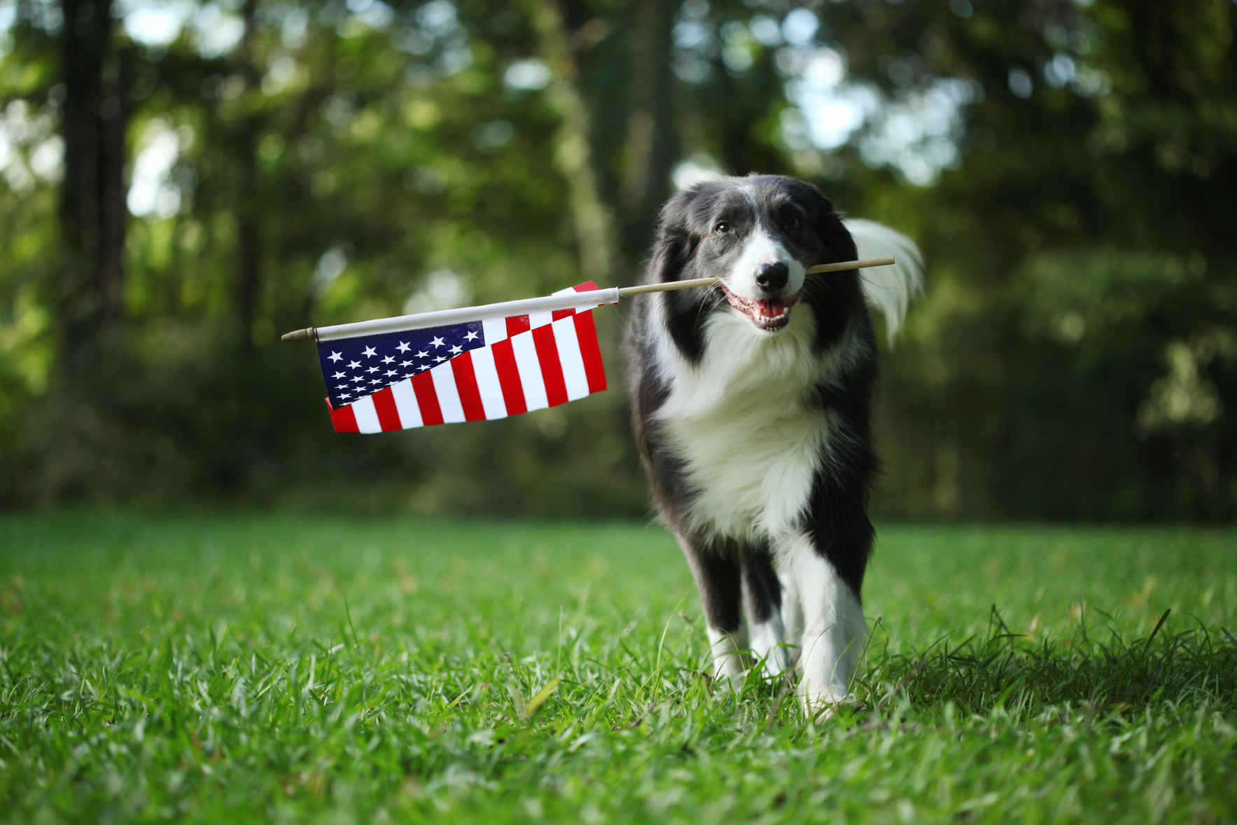 Support East Lake Vets for Vets and give the gift of veterinary care to the pets of veterans in need.	 image