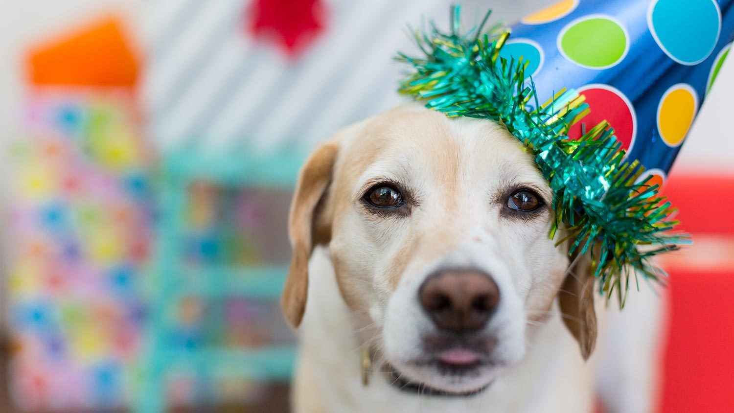 Send a birthday gift and help pets in need. image
