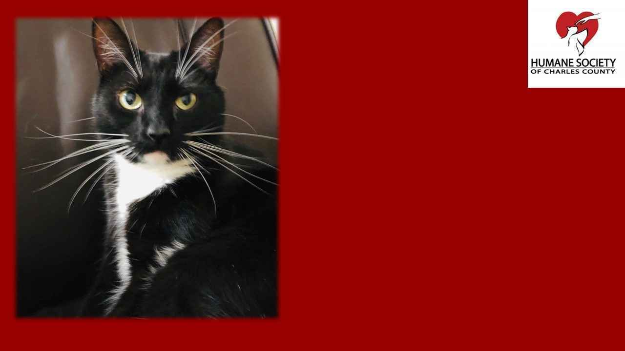 Tom's Feline Fund Helps Shelter Cats Get Adopted image
