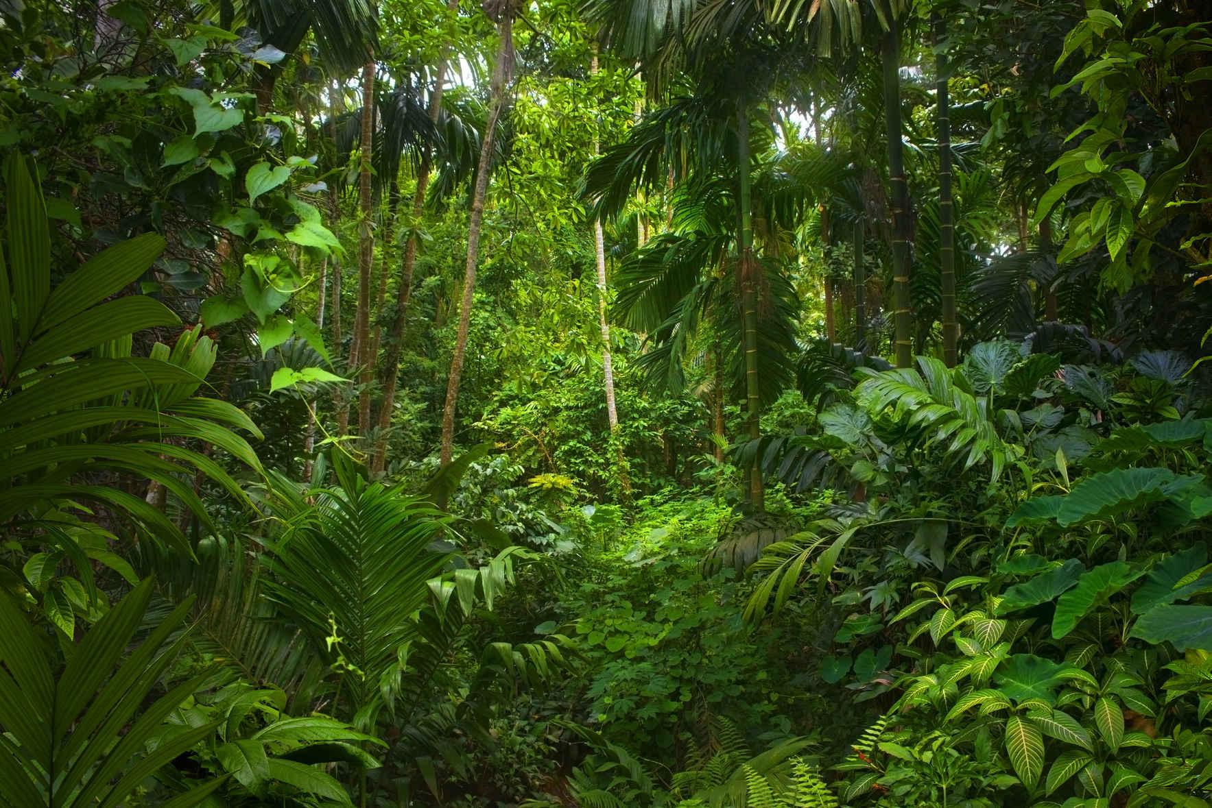 Dona para ayudar a los pueblos indígenas que enfrentan COVID-19 y detener la destrucción de la selva tropical image