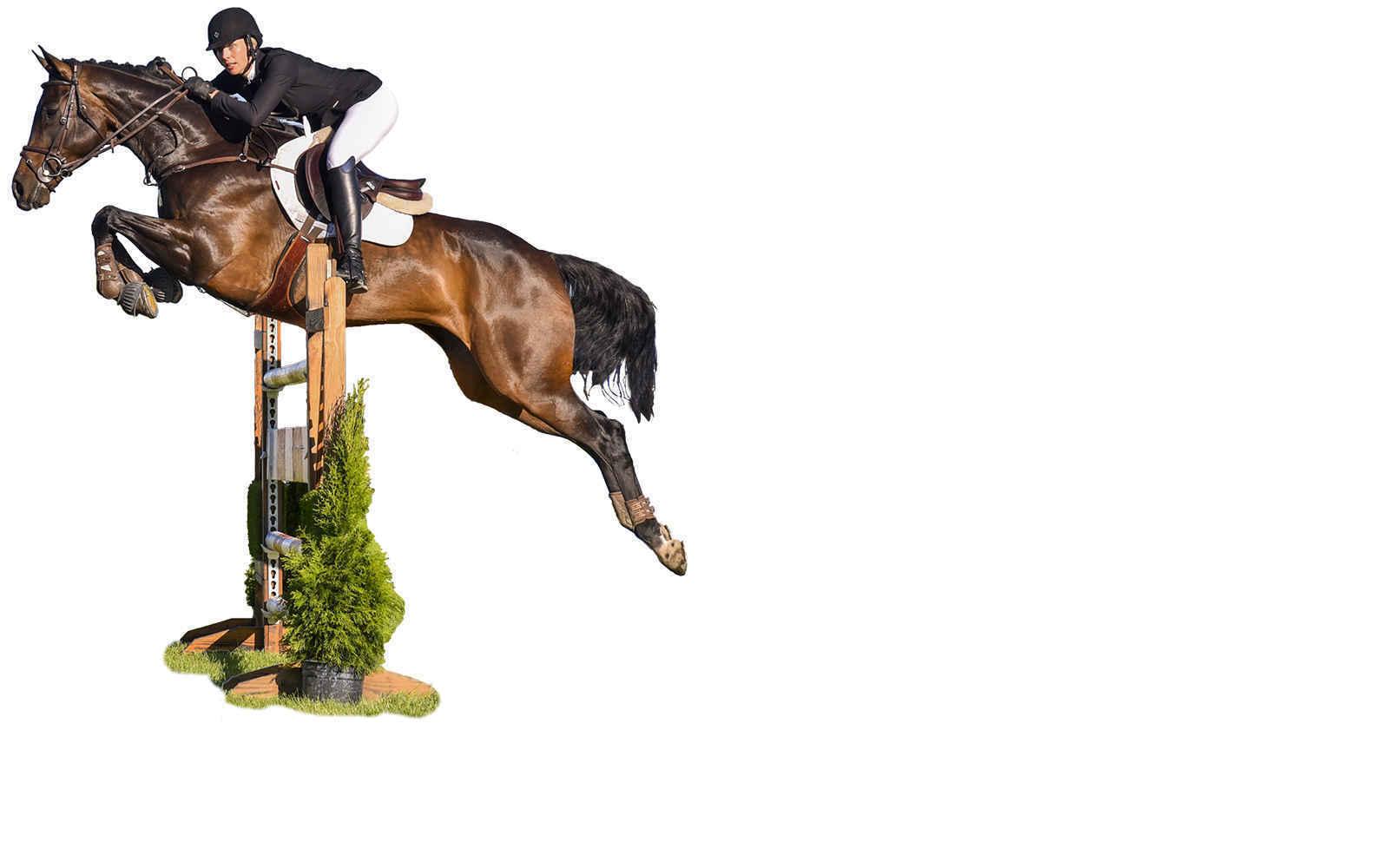 No-Show Horse Show image
