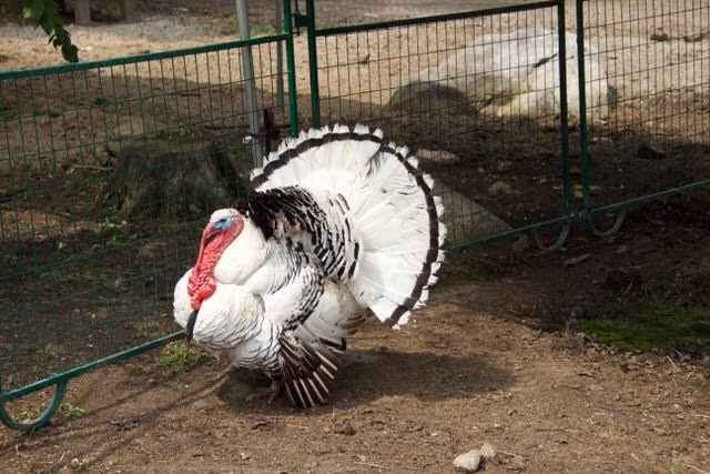 Sponsor the UFS Turkeys image