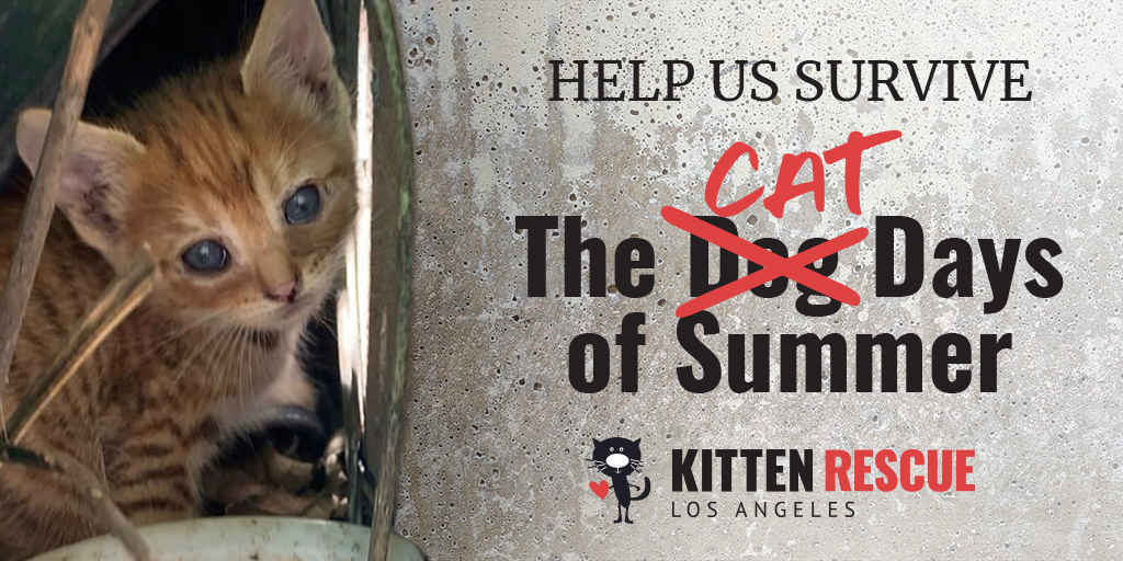 Help Us Survive The Cat Days of Summer  image