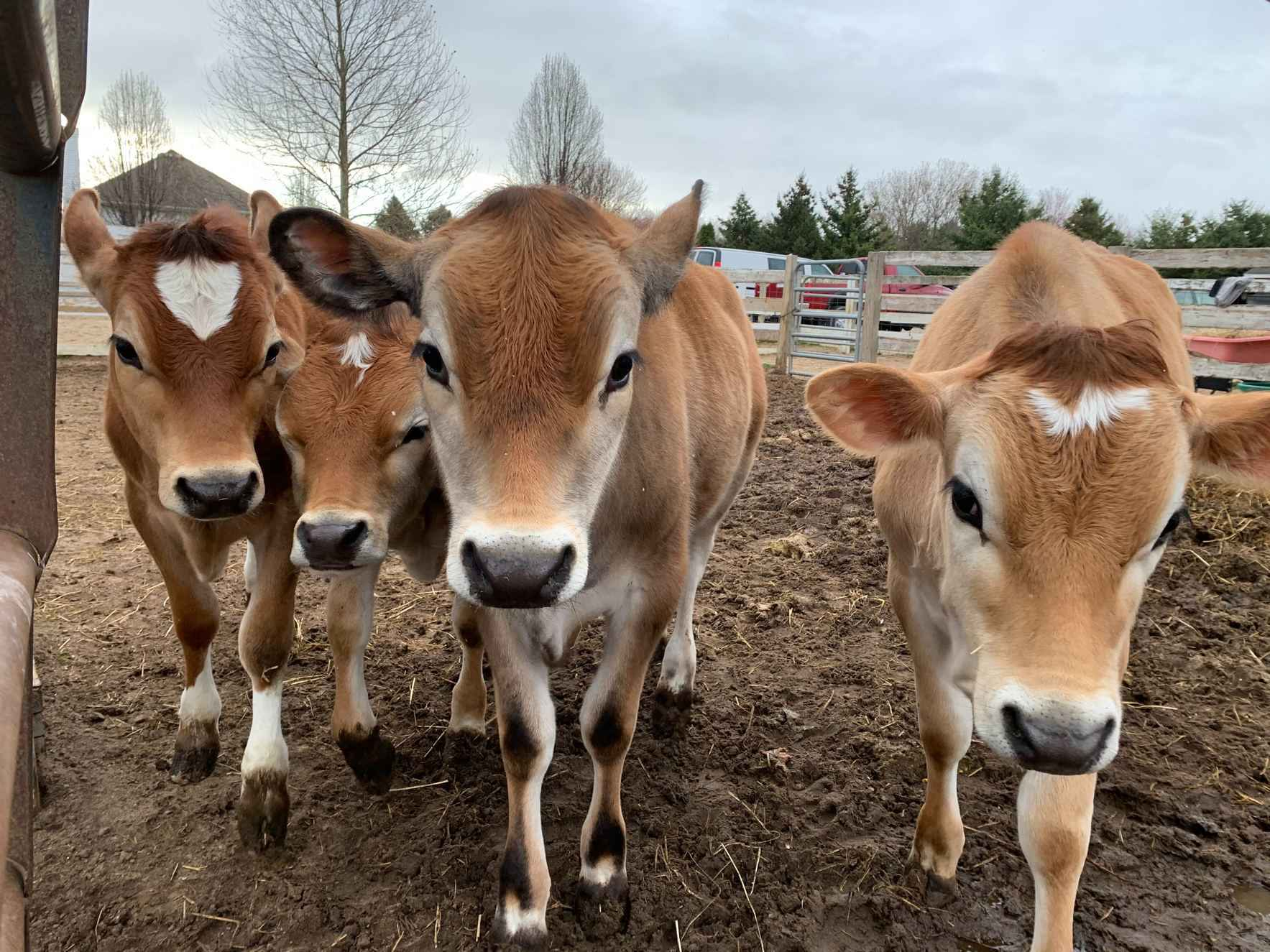 Help us care for our cows!  image