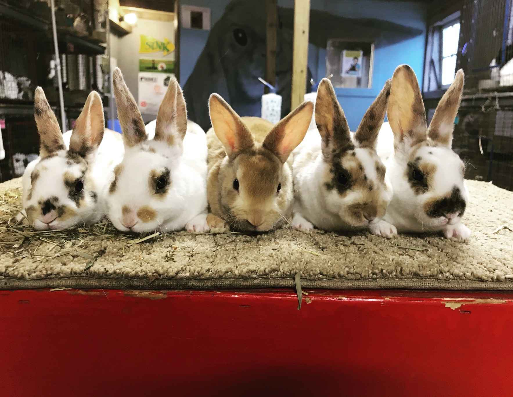 Care for our Rabbits image