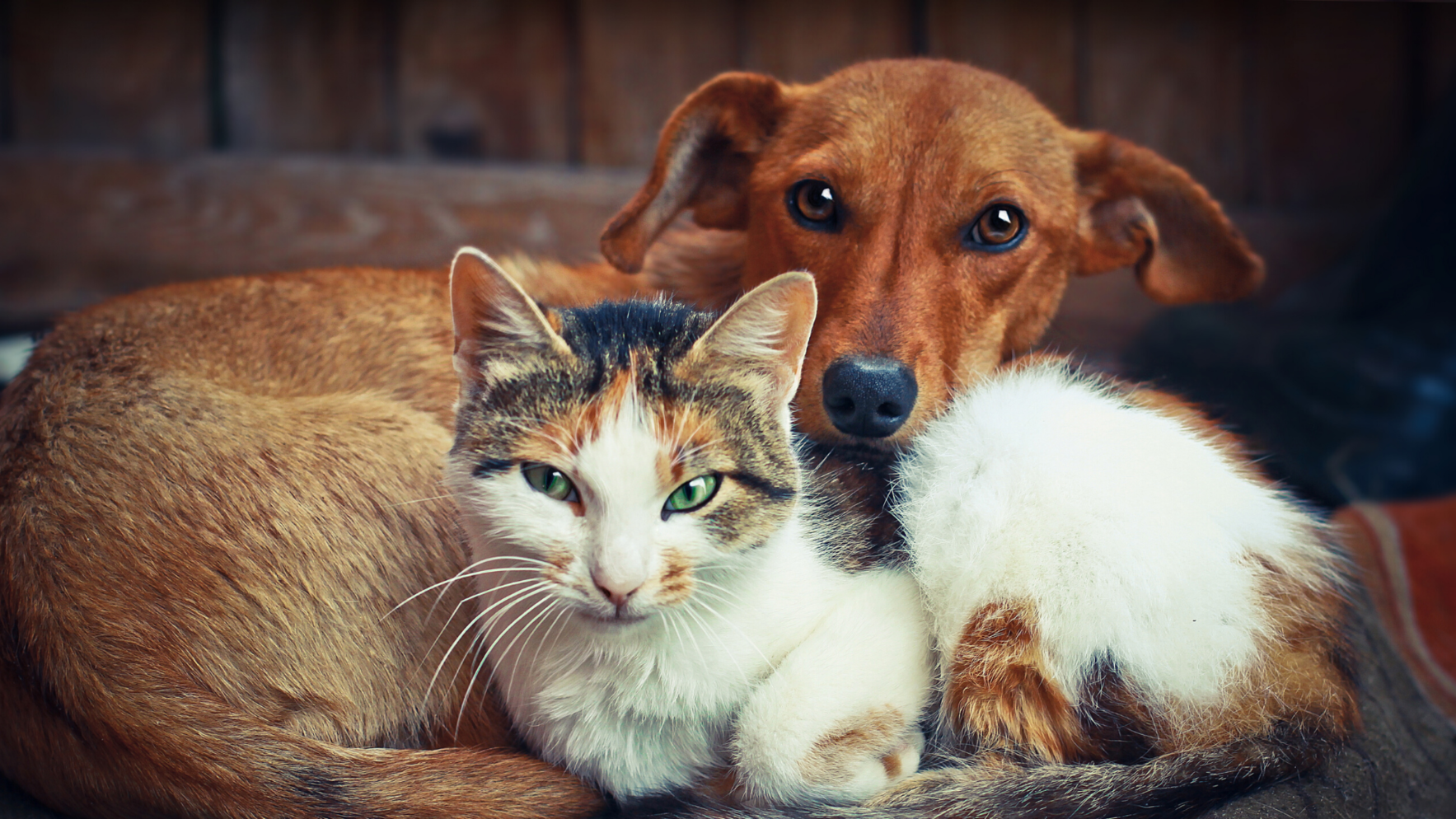 Good for homeless cats & dogs, our community and your business. image