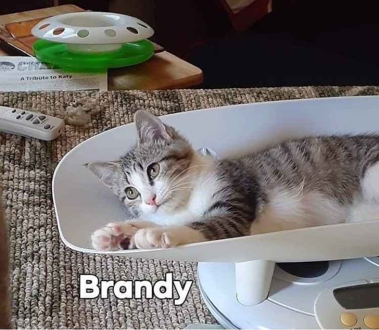 Donate to Save Brandy and Bruno image