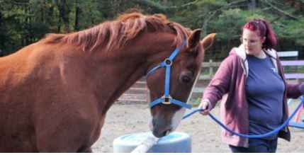 Donate today to support Horses 4 Heroes at GAIT image