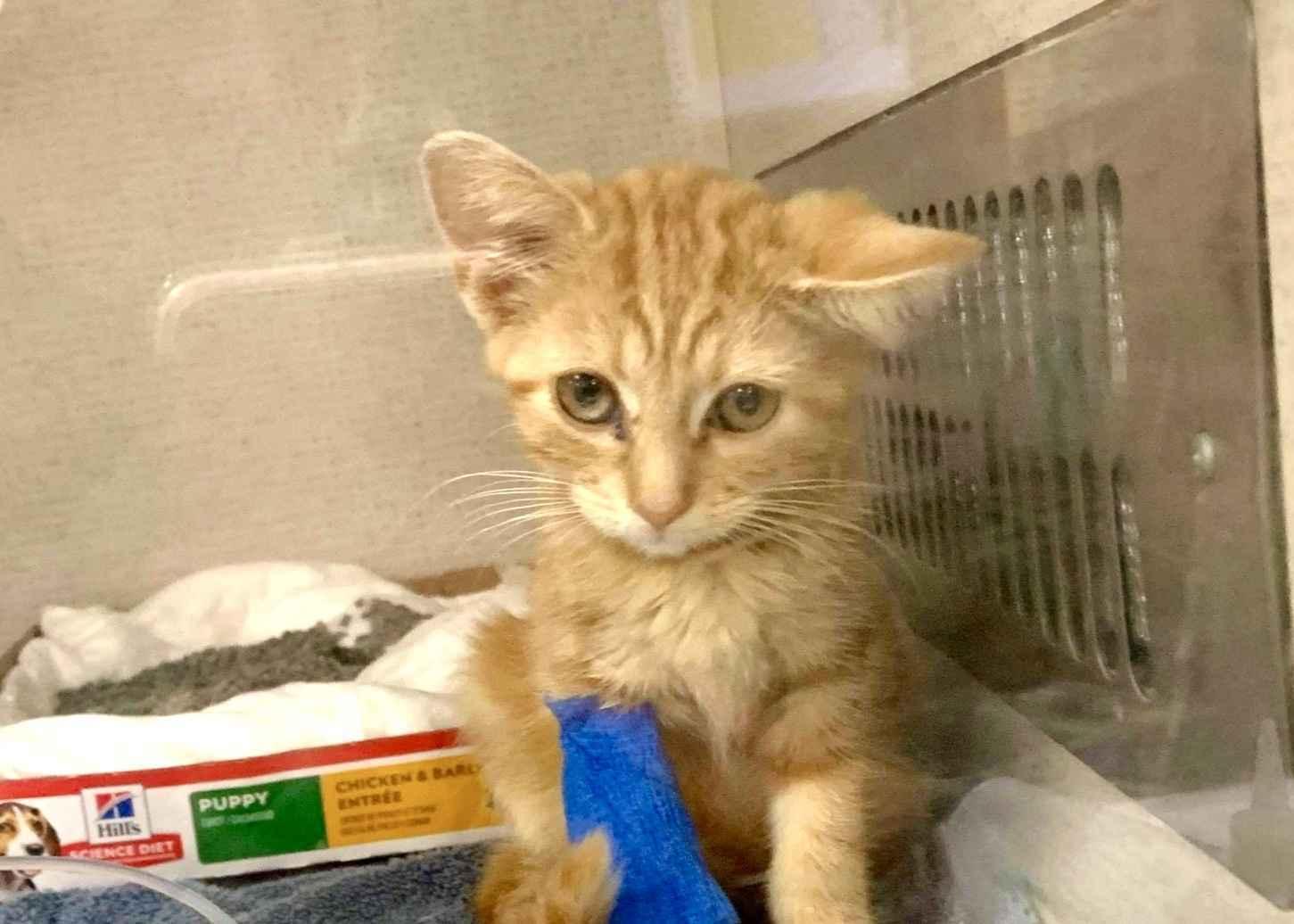 OSC needs your help with September 2020 kitten season! image