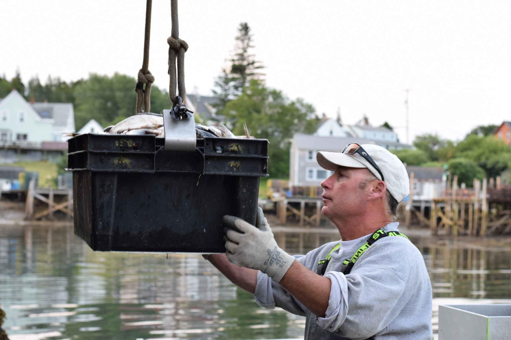 Fishermen Feeding Mainers image