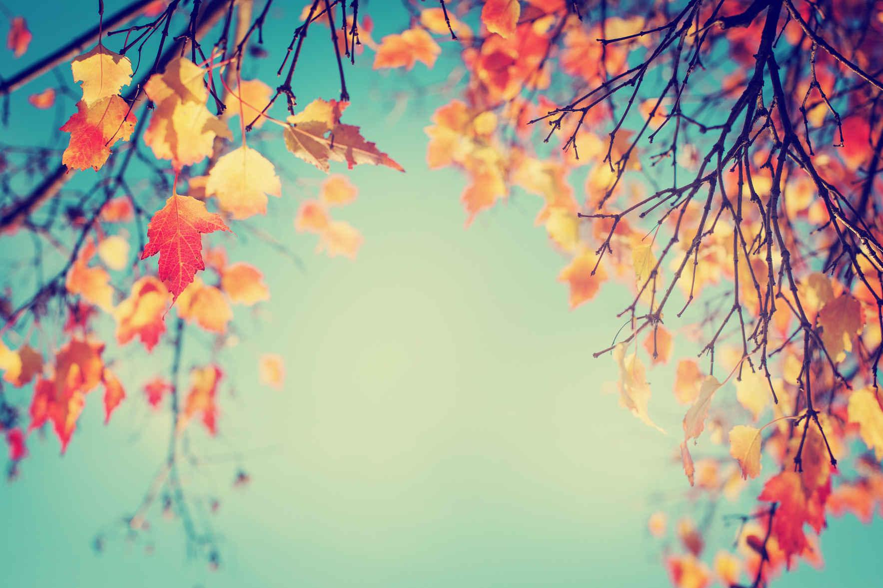 A Season of Gratitude image