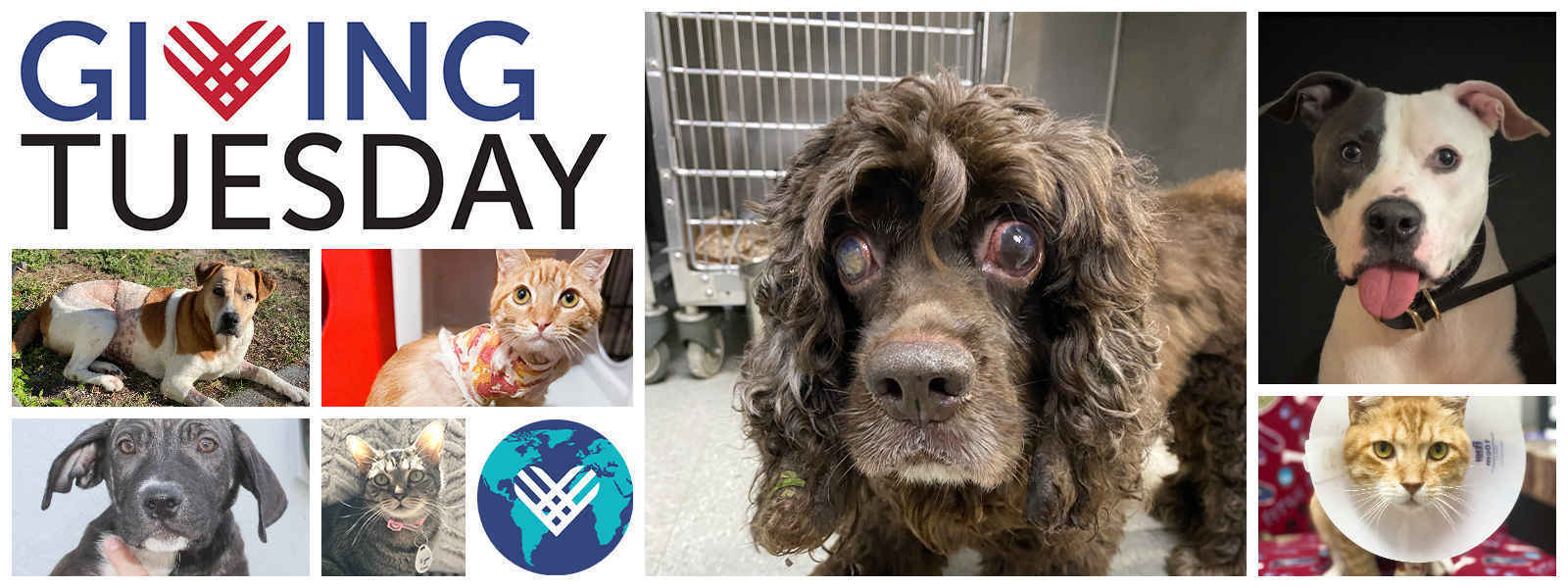Double your gift today for an animal with special needs image