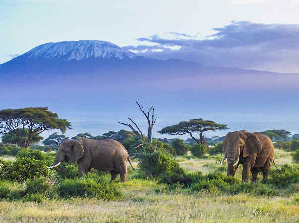 Wildlife Protection and Animal Welfare  image