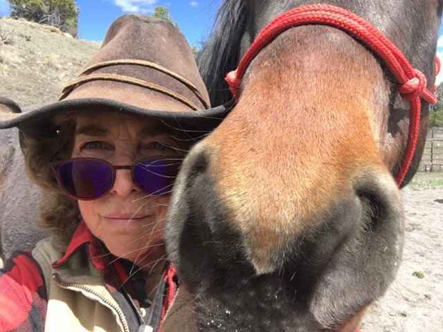 Help support the Thunder Heart Haven horses image