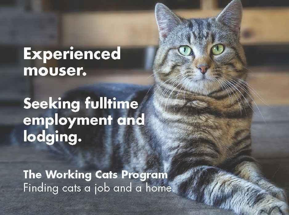 Help save more feline lives! image
