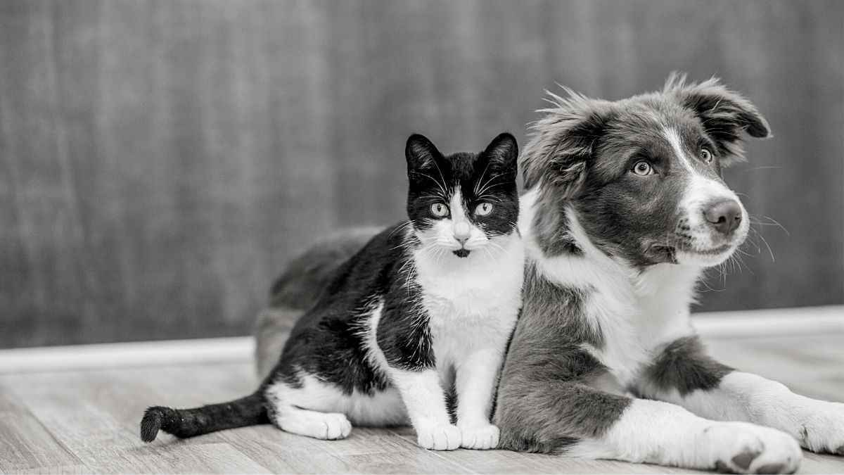Display your Pet's Portrait in the Jacksonville Humane Society Joy Gallery! image