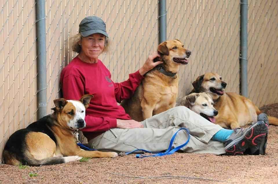 Humane Society of Central Arizona image
