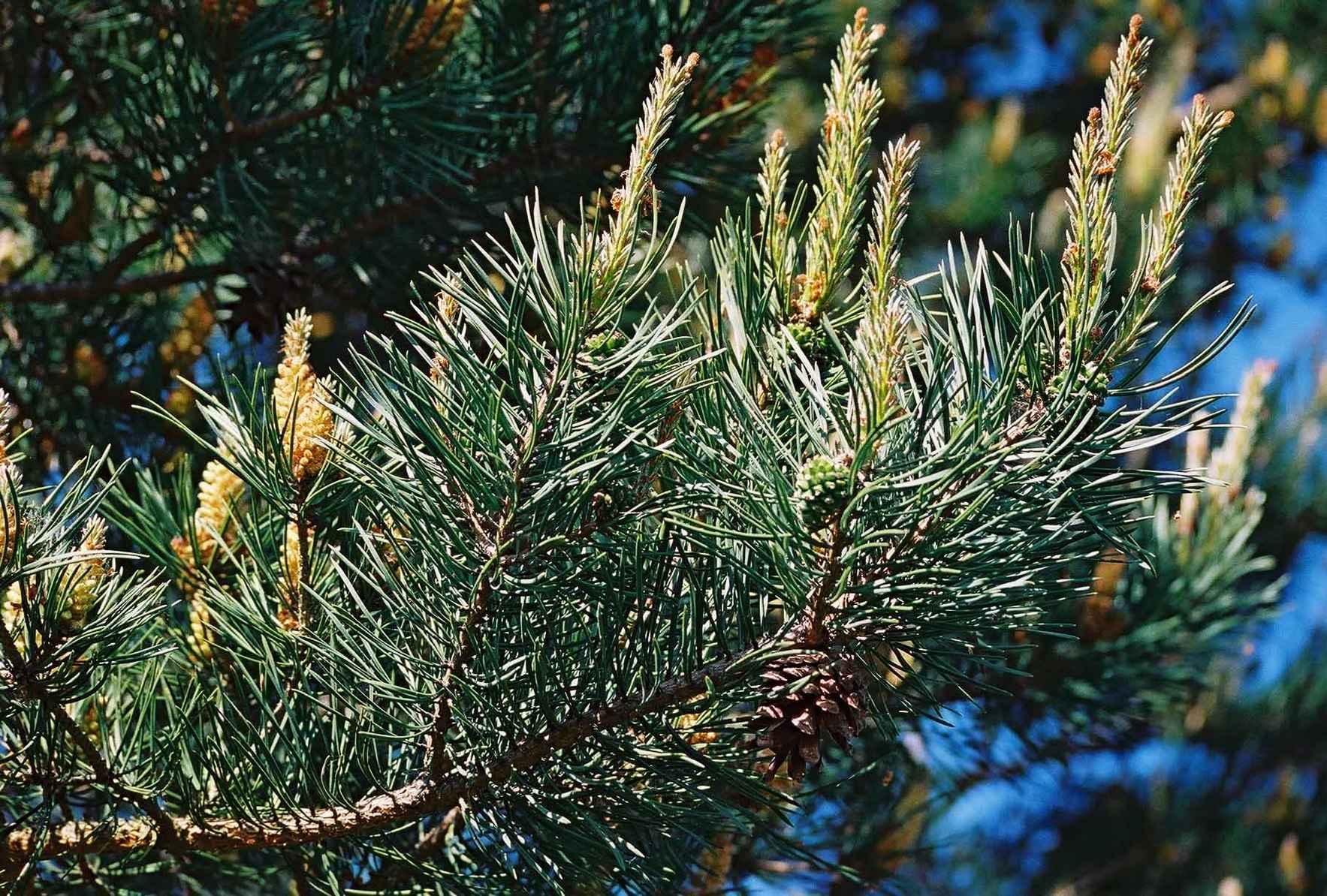 Season of Giving and Healing image