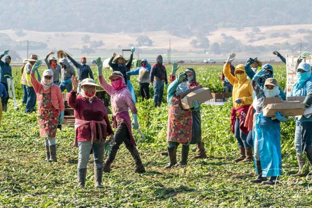Help Support Farmworkers & Their Families During the COVID Crisis image