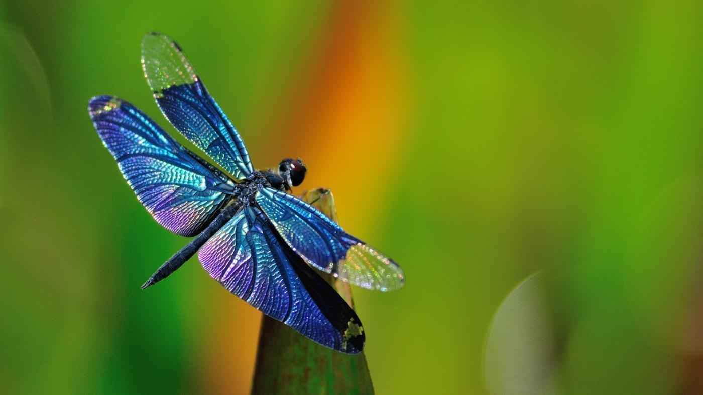 You Can Make A Difference. Donate Now To The Dragonfly House.  image