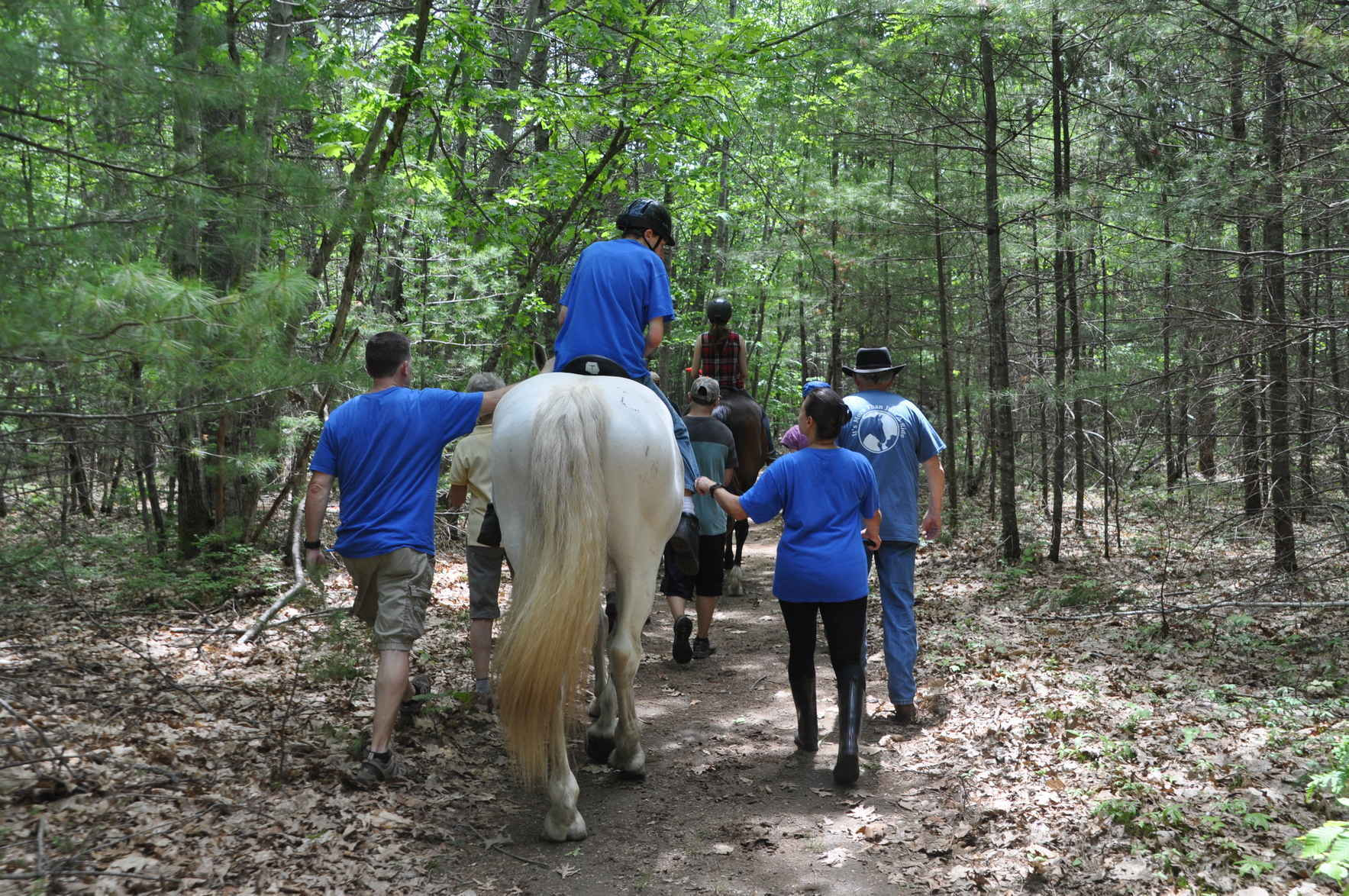 Changing lives through the healing power of horses image