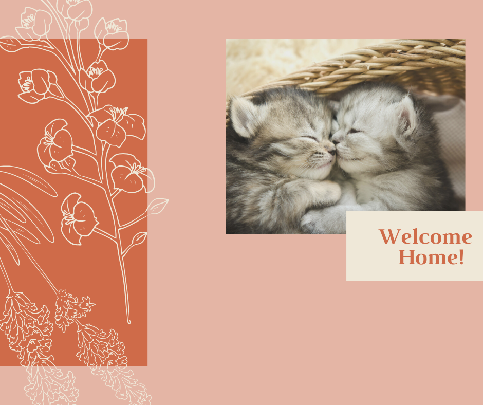 Adoption Donations  image