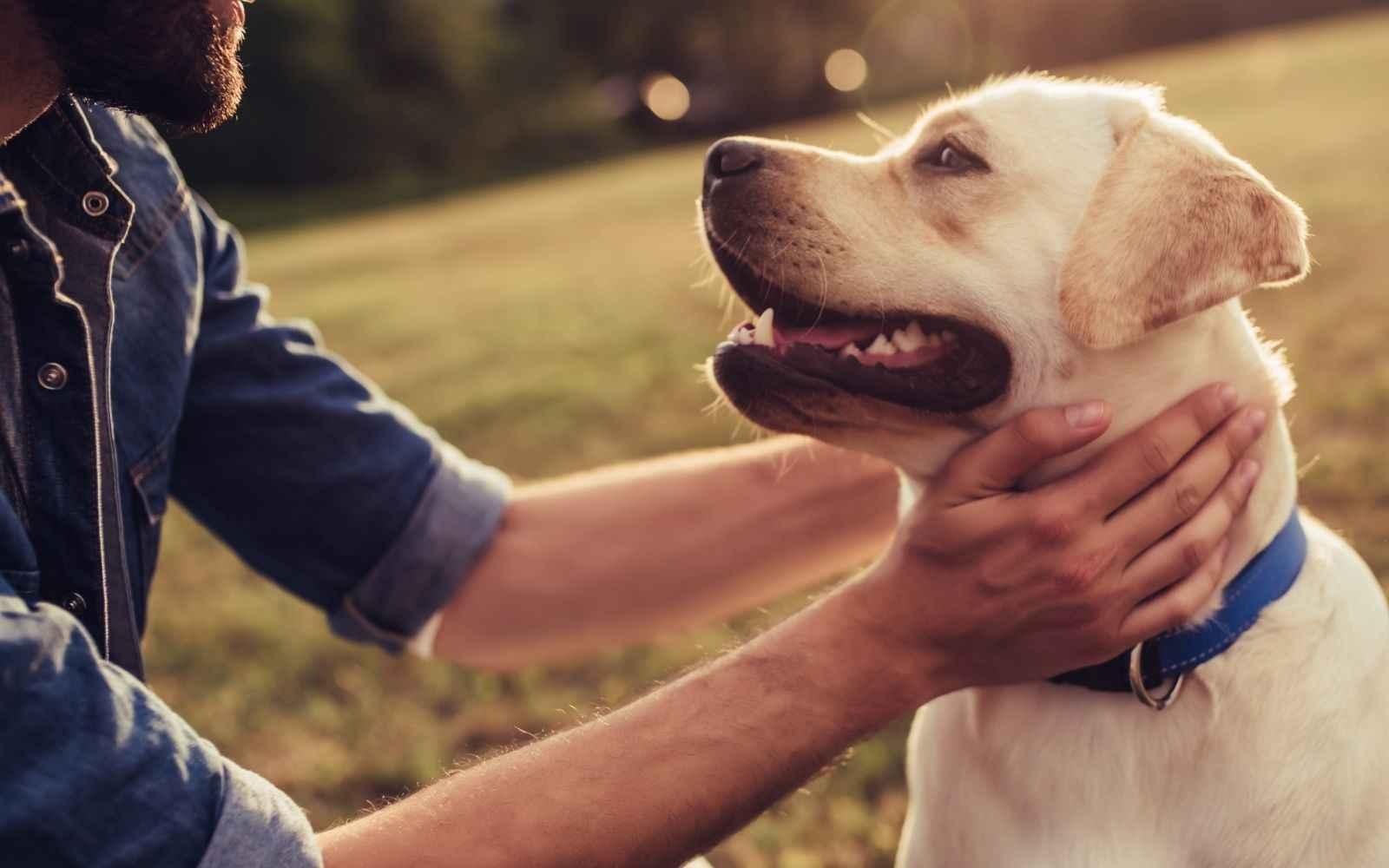 Change a pet's life! image