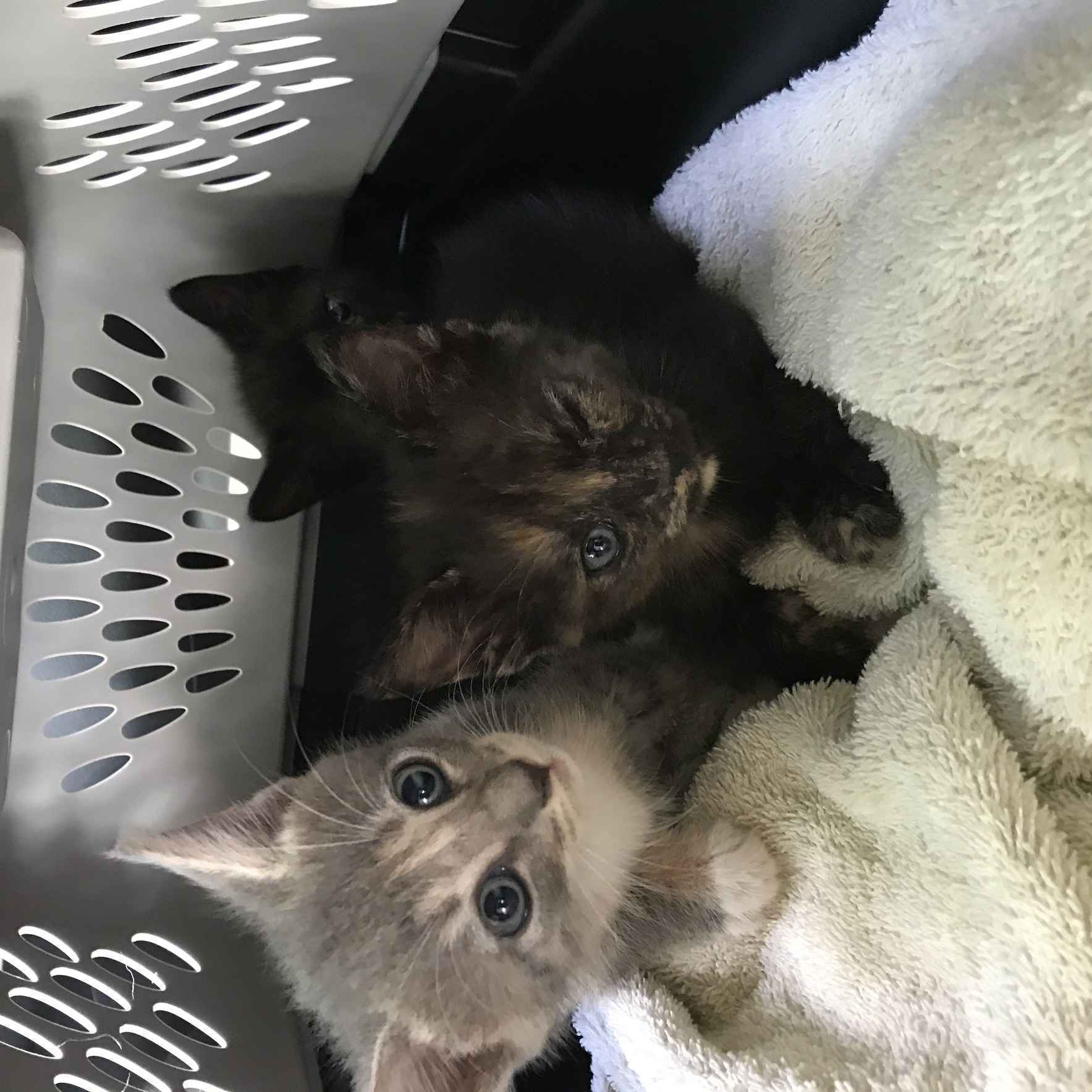 Trap, Neuter, Vaccinate and Return image