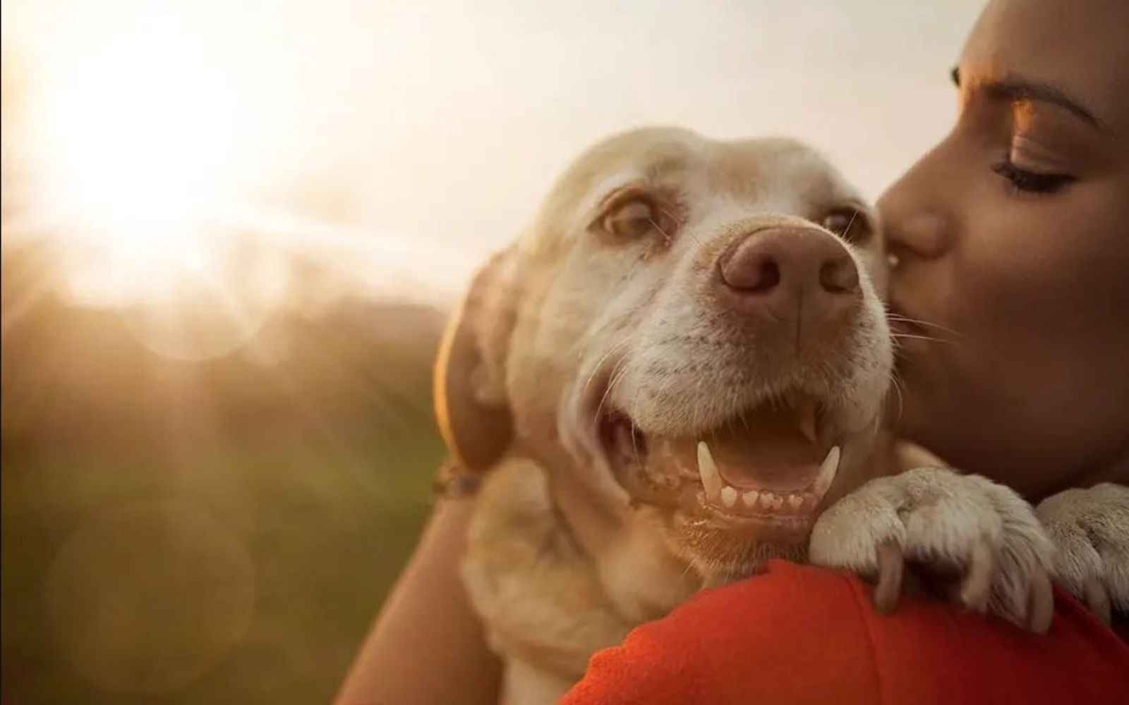 Donate today in honor of Love Every Pet Week image