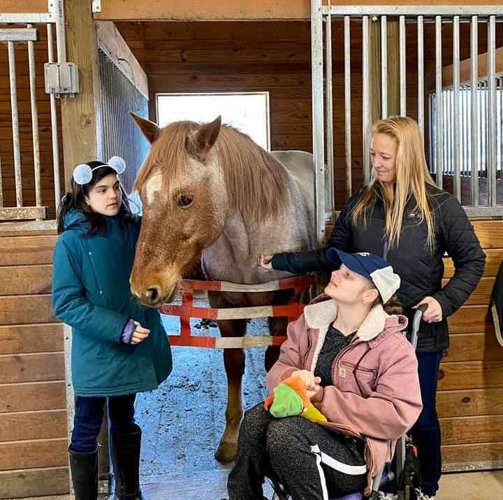 Help to provide bedding for GAIT Horses image