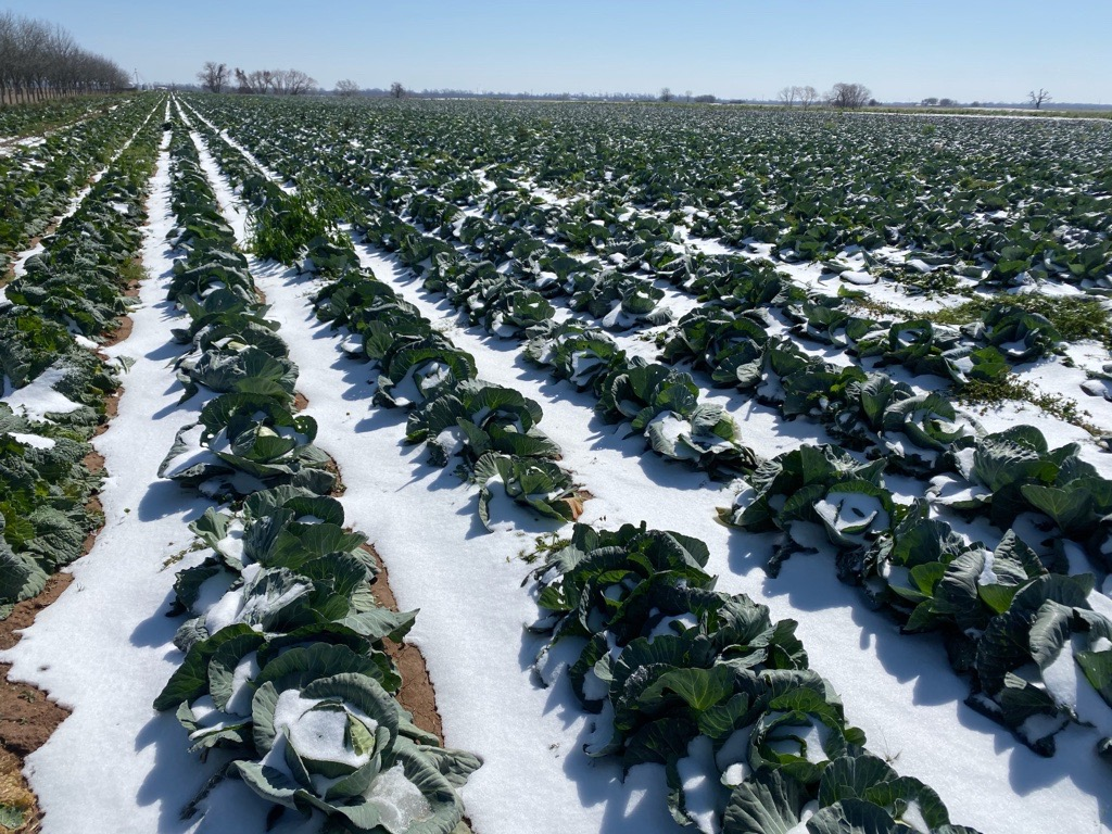 Directly support farmers impacted by the freeze image