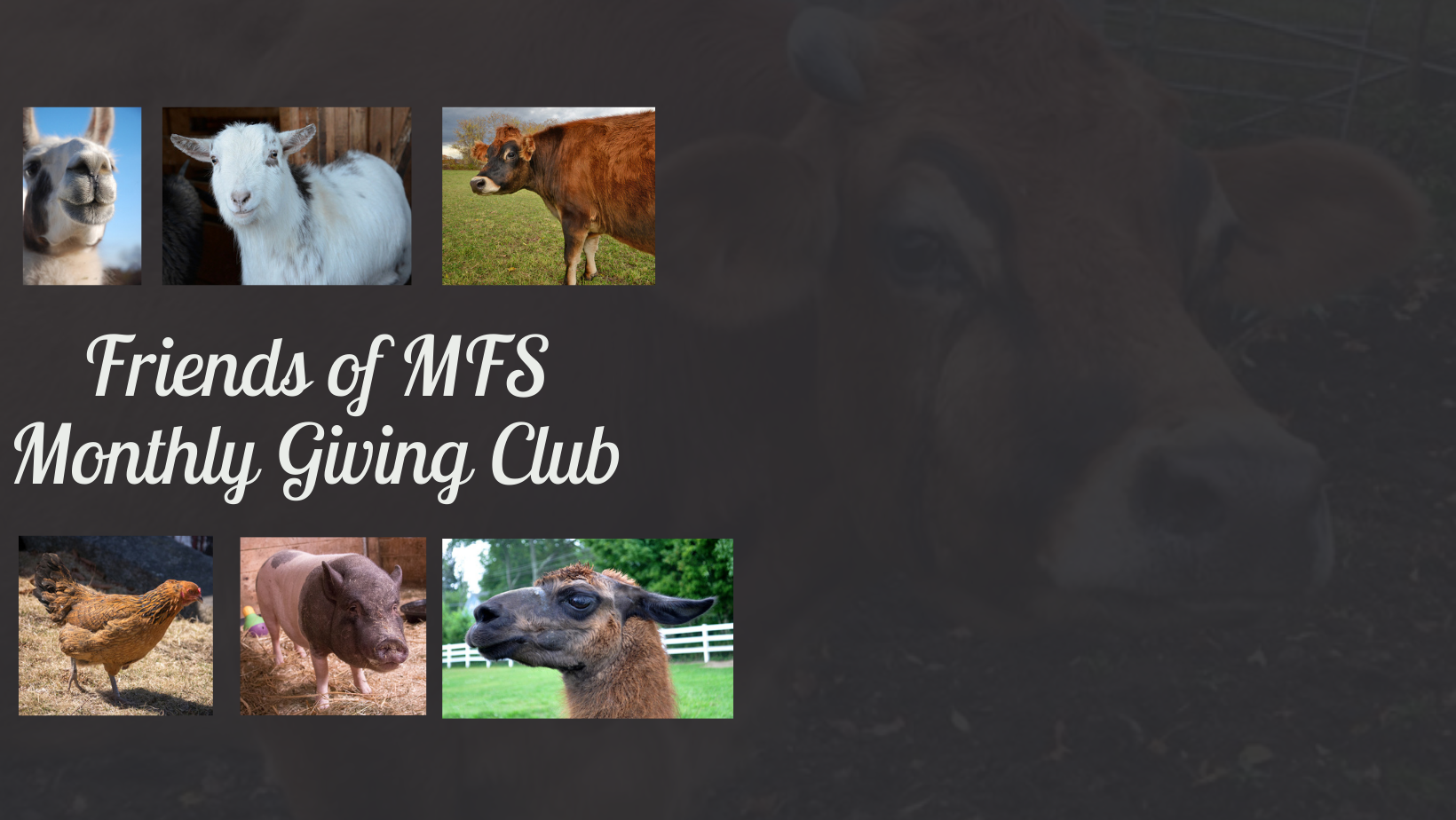 Join the Friends of MFS Monthly Giving Club! image