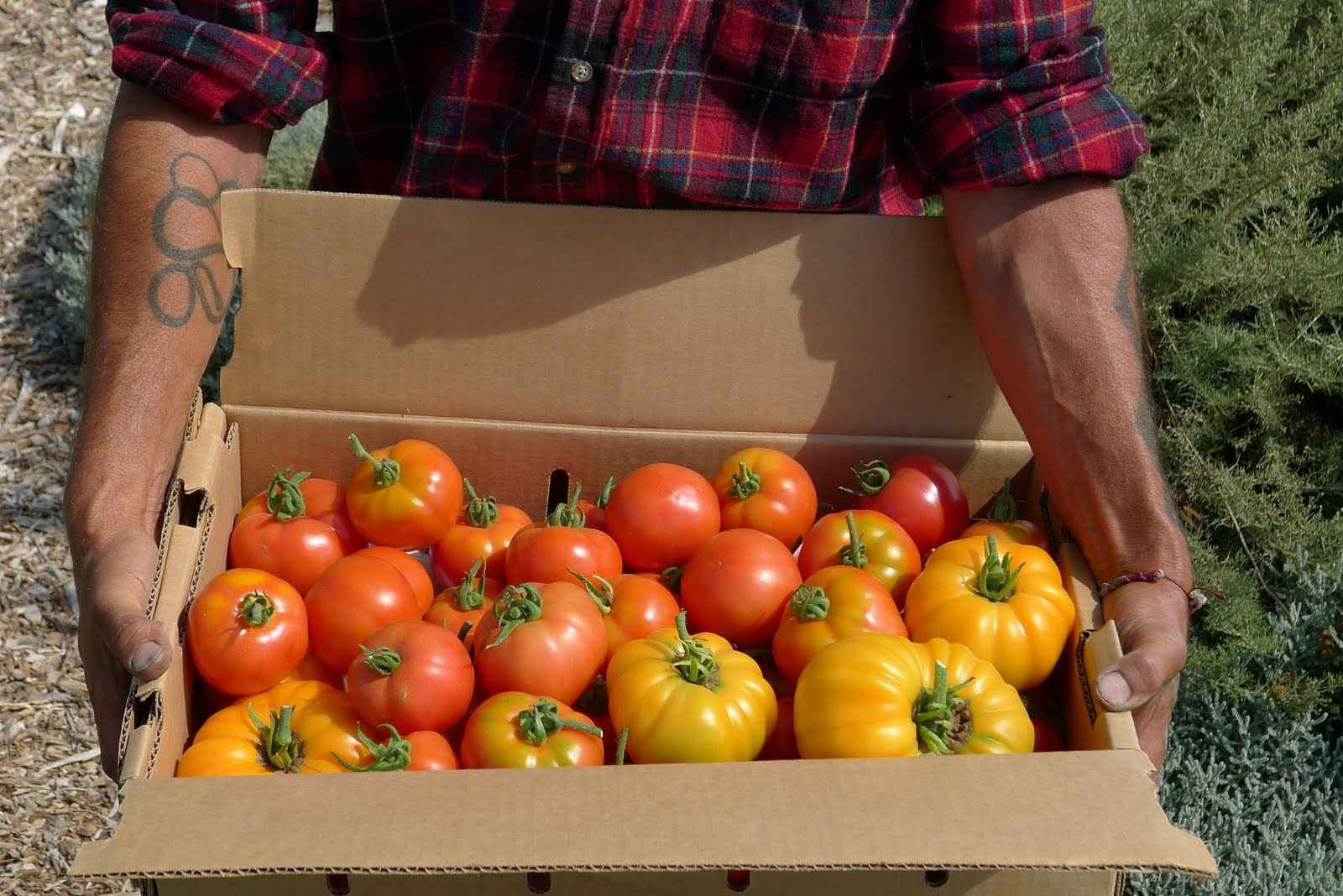 Please support HGP trainees as they give organic produce to other underserved Santa Cruz County residents image